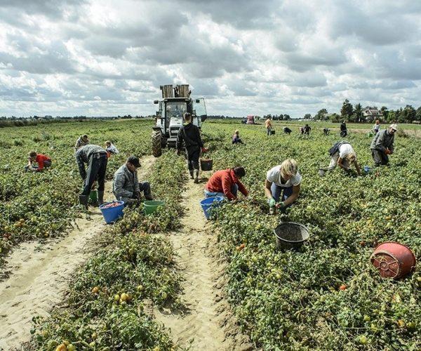 إحصائية: زيادة مطردة لإيطاليين يبحثون عن العمل بالزراعة